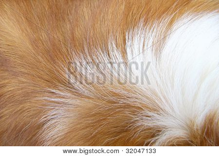 Macro Dog Hair