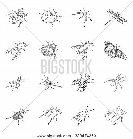 Vector Illustration Of Fauna And Entomology Sign. Collection Of Fauna And Animal Stock Symbol For We