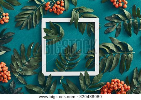 Forest sorbus and leaves top view on green background. Red wild rowan and branches social media post with copyspace design. Wild berries frame concept. Fall botanical backdrop, border idea