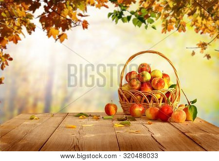 Fresh  apples in basket on wooden table.Autumn garden.Falling leaves natural background.