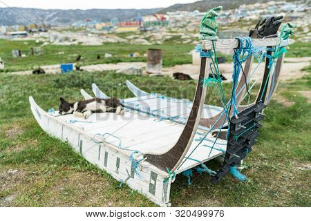 Greenland dog sled and husky sled dog puppy in Ilulissat Greenland. Two dog sleds parked in summer nature landscape on Greenland.