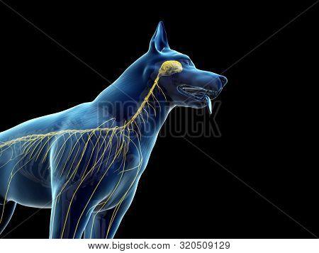 3d rendered anatomy illustration of the canine nervous system