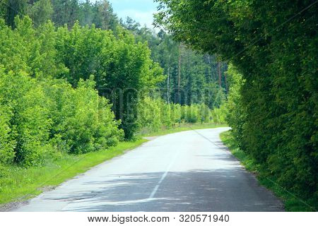 Asphalt Road And Green Roadsides With Bushes. Empty Highway. Overgrown Highway. Road With Dense Vege