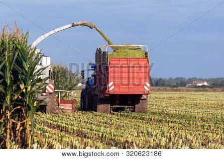 Combine Harvester Cutting Silage And Filling Trailer In Field Agriculture.