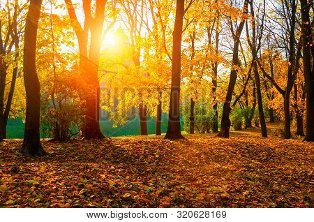 Autumn sunny landscape. Autumn park trees and fallen autumn leaves on the ground in the park in sunny autumn October day