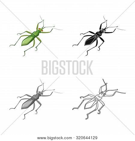 Isolated Object Of Grasshopper And Beetle Sign. Set Of Grasshopper And Ant Stock Symbol For Web.
