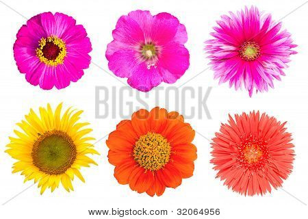 Many Flowers On The White Background