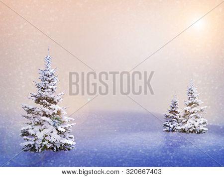 Winter Christmas Landscape - Frosty Trees In Winter Forest. Winter Christmas Landscape With Snowy Tr