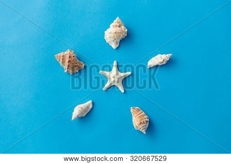 sealife and summer concept - different sea shells on blue background