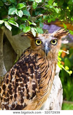 Owl Sitting On The Tree