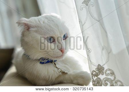 Cute white cat portrait in natural window light