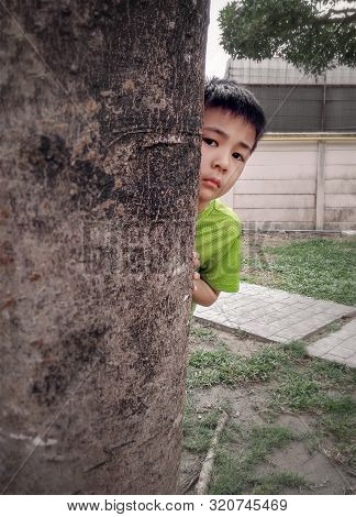 Boy Peeks Around A Tree In A Park While Playing Hide-and-seek