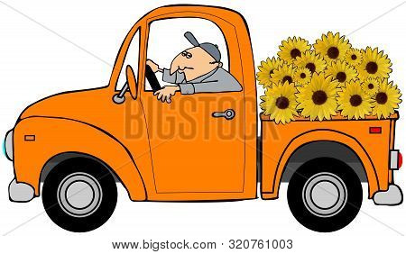 Illustration Of A Man Driving An Old Orange Pickup Truck Full Of Giant Sunflowers.