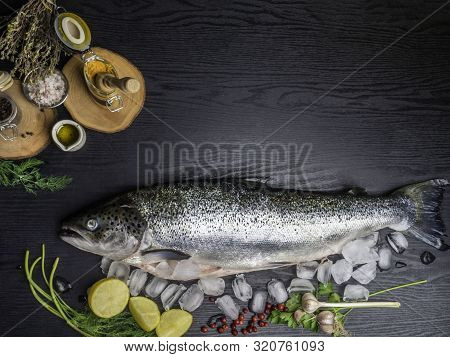 Salmon Fish In Ice Cubes, Raw Salmon Fish Whole With Ingredients For Cookings On Black Wooden Table.