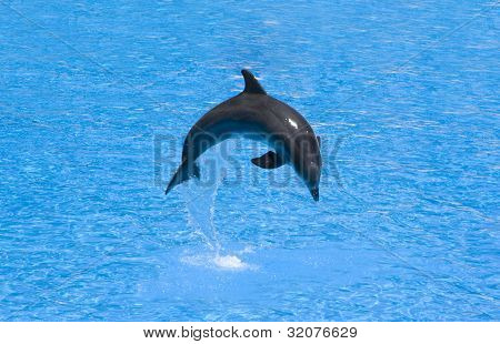 Dolphin In A Jump