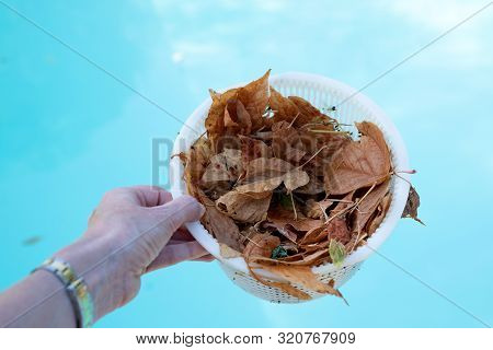 Hand Holding A Pool Skimmer Basket Which Is Full Of Leaves