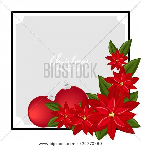 Christmas Holiday Season Background With Red Poinsettia Christmas Flower And Christmas Ball. Xmas Gr