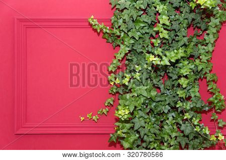 Red Wall With Frame Half Covered By Common Ivy. Also Known As Hedera Helix, English Ivy Or European