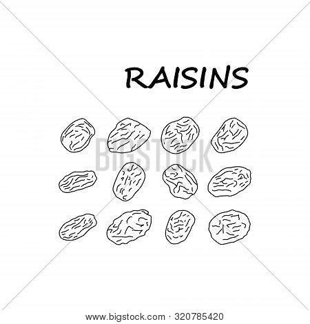 Informative Poster Sketch Set Inscription Raisins. Hand-drawn Dried Grape Berries. Dried Raisins. He