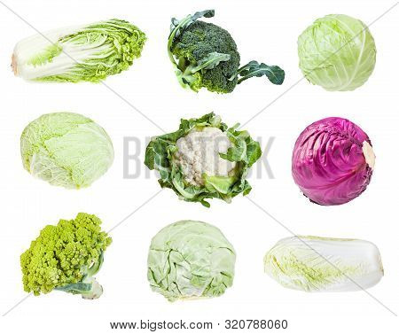 Various Headed Cabbages (romanesco, Broccoli, Cauliflower, White Cabbage, Red Cabbage, Napa Cabbage,