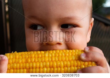 Small Child Eating Buttered Corn On The Cob. Toddler Biting Shiny Boiled Maize With Kernels. Harvest