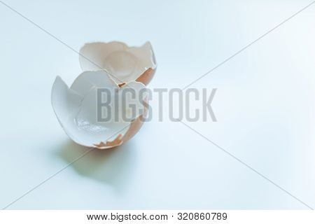 Brown Chicken Eggshells On A white Background With Copy Space poster