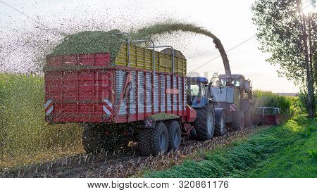 Agricultural Machines Work In The Field When Mowing Silage Maize - Horizontal Photo