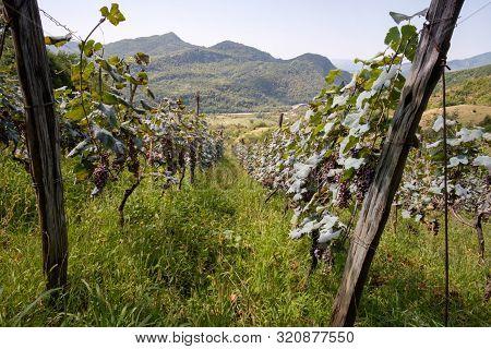 A Vineyard At Highland Georgian Region Racha