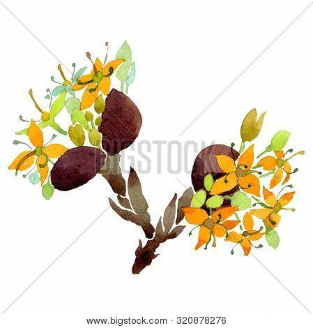 Cornus Mas Floral Botanical Flowers. Watercolor Background Set. Isolated Cornus Mas Illustration Ele