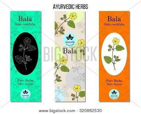 Ayurvedic Herbs Banners. Bala Sida Cordifolia , Or Country Mallow, Flannel Weed, Medicinal Plant. Ha
