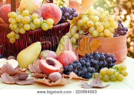 Autumn Fruit, Autumn Organic Fruits On Table - Autumn Harvest