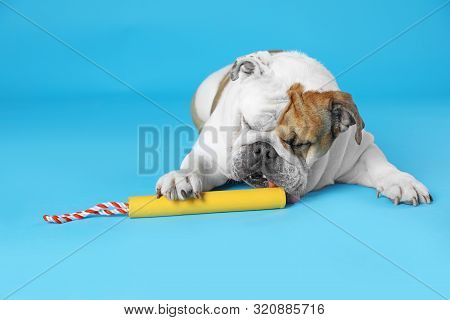 Adorable Funny English Bulldog With Toy On Light Blue Background