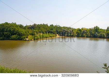 White Swan (lat. Cygnus) On The Steppe Reservoir