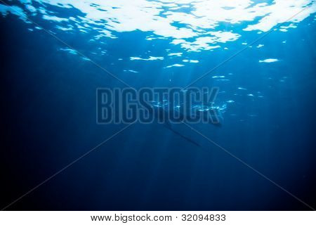 Blue Water Spearfishing