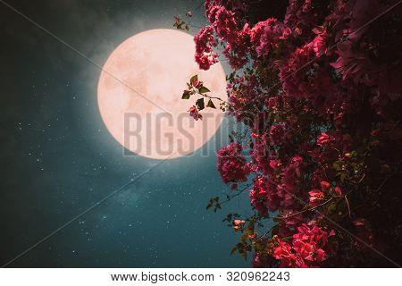 Romantic Night Scene - Beautiful Pink Flower Blossom In Night Skies With Full Moon. - Retro Style Ar