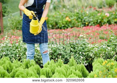 Nursery Garden Worker In Denim Apron Spraying Cypress Sprouts With Water