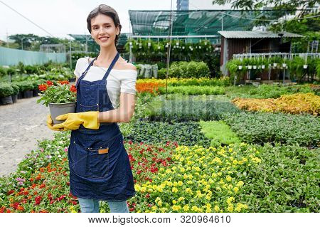 Portrait Of Pretty Cheerful Young Woman Standing In Nursery Garden With Pot Of Blooming Flower In Ha