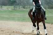 Horse and rider training for the sport of dressage poster