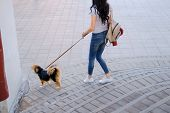 Woman is walking with her dog on a leash. Funny spaniel mutt in summer city poster