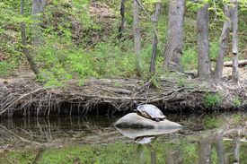 Stone color turtle