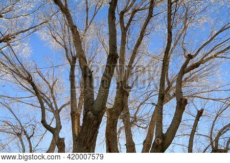 Autumn Fall Dead Leaf Tree Tops With Bright Sunny Blue Sky Beyond As A Landscape Nature Scene