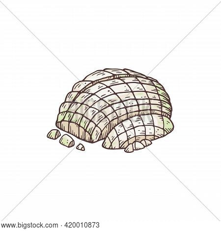 Peeled And Chopped Half Of White Onion, Hand Drawn Vector Illustration Isolated.