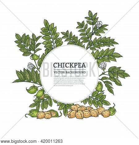 Background Or Frame With Chickpea, Engraving Vector Illustration Isolated.