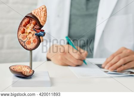 Kidney Health Concept. Close-up, Anatomical Model Of Human Kidney On Doctor Table At Urology