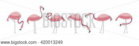 Vector Set With Six Flamingos. Flamingos Stand Isolated On A White Background. Hand Drawn Illustrati