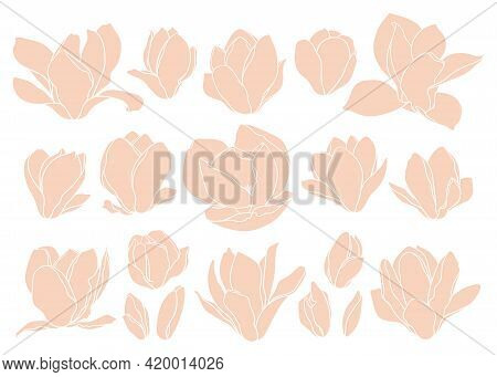 Set Of Magnolia Flowers On White Background. Floral Collage In Beige Colors, Trendy Style. Modern Mi