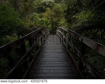 Wooden Pedestrian Bridge Leading To Hidden Secret Lush Green Tropical Forest Waterfall Wentworth Fal