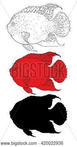Black Red Fish Set Sketch On White Background. Graphic Color Background. White Background. Vector Pa