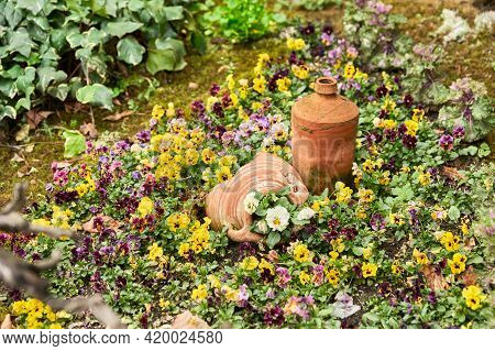 A Flowerbed Of Multicolored Tricolor Violas. Decorative Flower Pots Are Placed In The Center Of The