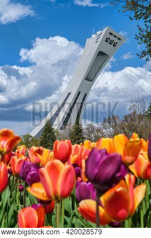 Montreal, Ca - 10 May 2021: Montreal Olympic Stadium Tower With Colorful Tulips In The Foreground